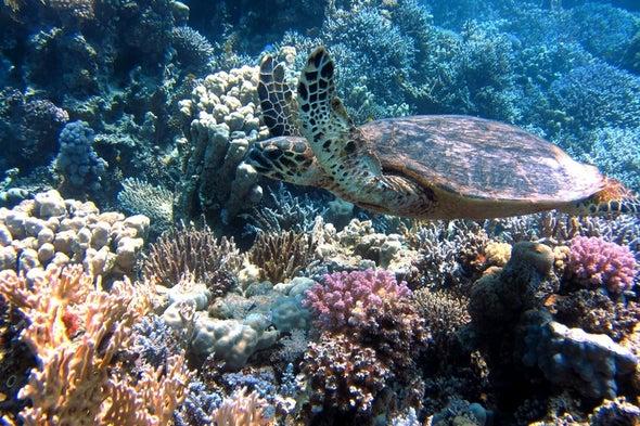 تغيُّرات المناخ تهدد استثمارات مصر في سياحة الشعاب المرجانية