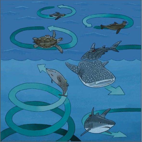 حيوانات بحرية ضخمة تسبح بأنماط دائرية متشابهة