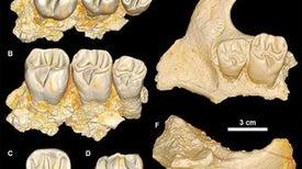 """""""موناميز"""".. حفرية مصرية تؤكد أن أفريقيا كانت موطن أحد أكبر أجداد القوارض"""