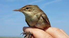 الطيور تستخدم المجال المغناطيسي للأرض لتحديد مساراتها