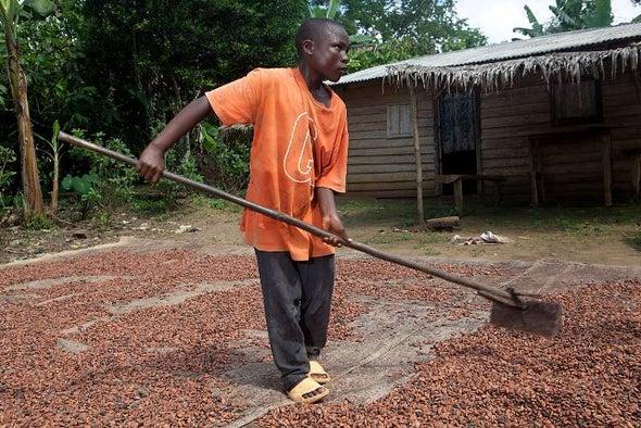 رفع سعر الكاكاو يمنع استغلال الأطفال في غانا