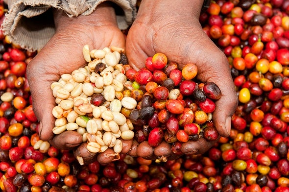 استهلاك الدول الغنية للمنتجات الزراعية يحفز إزالة الغابات في البلدان النامية