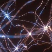 موجات الدماغ