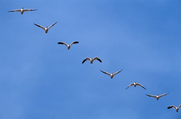 تحليق الطائرات في تشكيلاتٍ كأسراب الطيور يُقلل انبعاثات الطيران