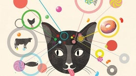 لماذا لا تستطيع القطط تذوُّق الحلوى؟