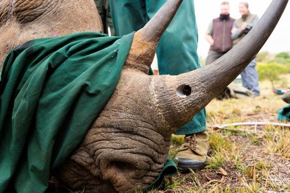 محاكمة صيادي وحيد القرن باستخدام قاعدة بيانات الحمض النووي