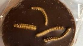 التركيز على تسويق طعم الحشرات اللذيذ يُساعد على تناوُلها