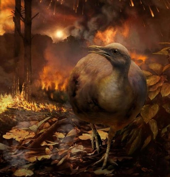 كيف نجت بعض الطيور من مصير الديناصورات قبل 66 مليون عام؟