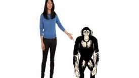 لماذا تفوق قوة الشمبانزي الجسدية قوة الإنسان؟