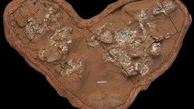 بيض أسلاف الديناصورات الأوائل شهد ثلاث مراحل من التطور