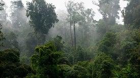11% من الغابات الاستوائية المدمَّرة يمكنها التعافي