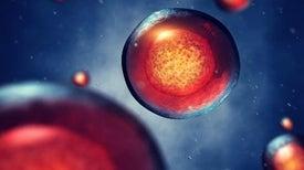 """الأب الروحي لـ""""الخلايا الجذعية الوسيطة"""" يعصف بمسماها القديم"""