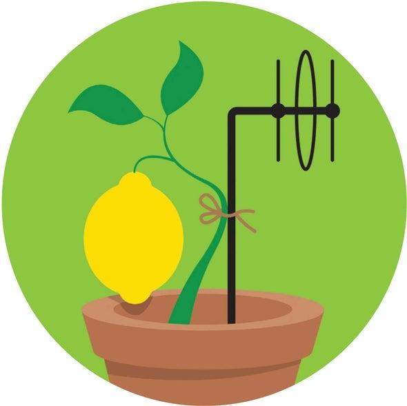 """تطوير """"شبكة إنترنت نباتية"""" تخبر المزارعين متى يتوجّب عليهم ريّ محاصيلهم"""
