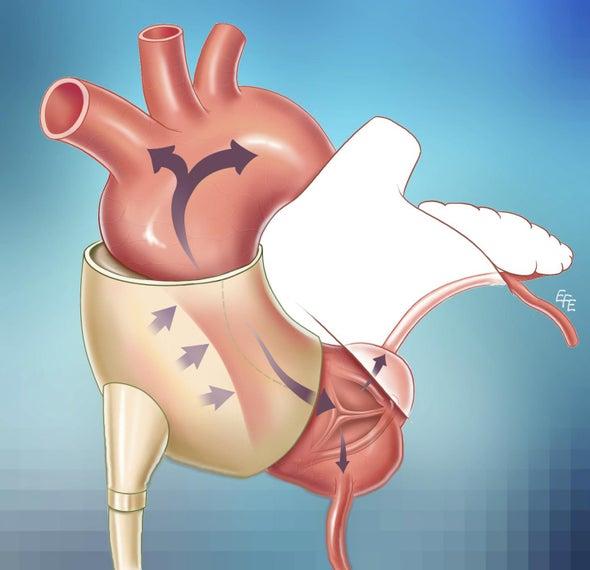 في نشرة العلوم: اكتشاف خلايا جديدة تشفي مرضى القلب