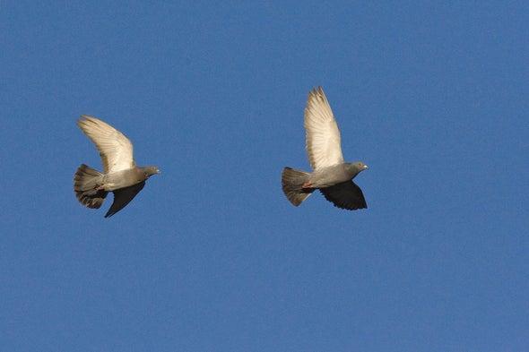 مجهود أكبر، لتبقى الطيور معًا