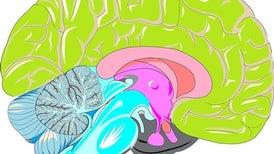 في المخ نعيم وجحيم
