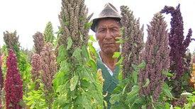 محاصيل غير تقليدية قد تنتصر في «الحرب ضد الجوع»