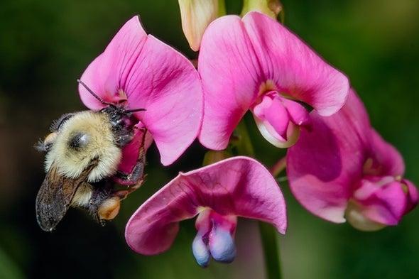 «الفوضى المناخية» تهدد النحل الطنان