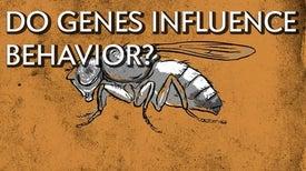 كيف تؤثّر الجينات في السلوك؟