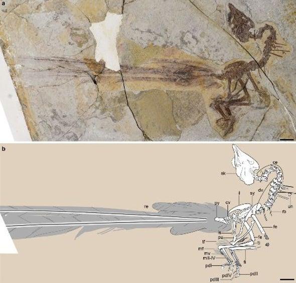 اكتشاف طائر يشبه طائر الصين الأسطوري عمره 120 مليون عام