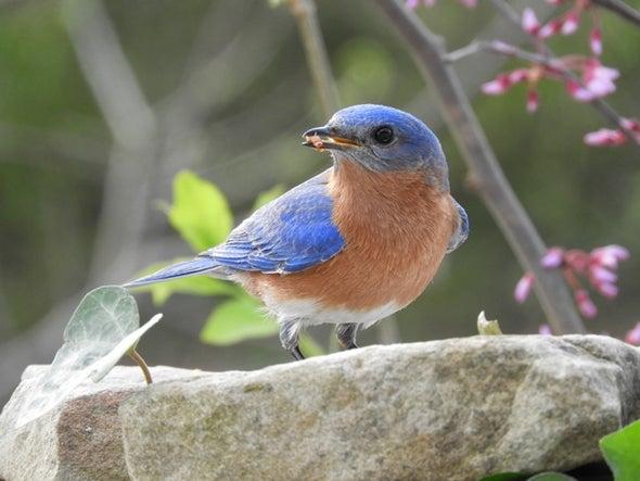 تغذية الطيور تساعدها على مقاومة الطفيليات