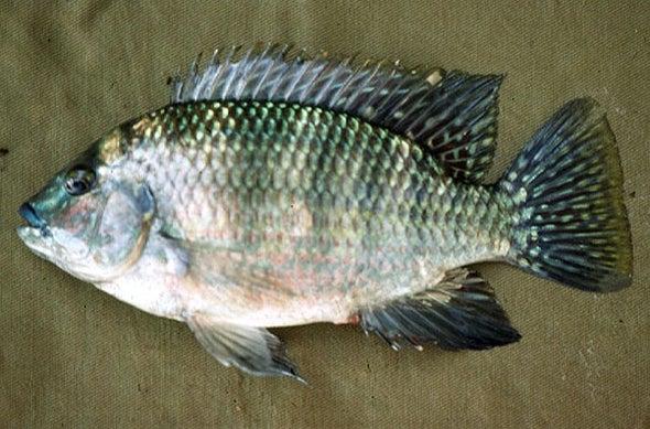 اكتشاف بقايا أسماك نيلية في صحراء ليبيا