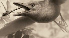 كريستالات الكوارتز تزيد لغز النظام الغذائي لـ«طيور العصر الطباشيري» غموضًا