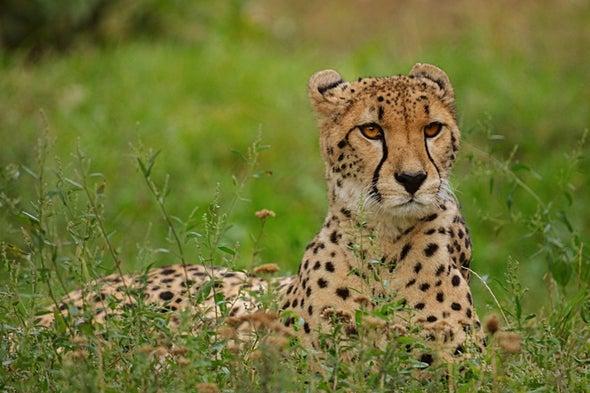 ضرورة تشديد الرقابة على تجارة الحيوانات البرية للحد من مخاطر الإصابة بالفيروسات