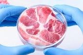 من يهضم اللحم المزروع؟