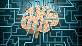 «شبكة صرف» داخلية تخلص المخ من السموم
