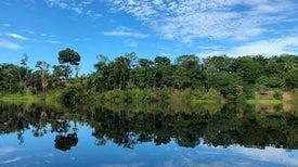 باحثون يتعقبون تاريخ الإنسان من خلال حلقات الأشجار المطيرة