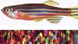 السمكة المتوهجة: كل خلية جلدية تتوهج بلون مختلف