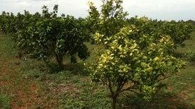 آراء المزارعين تعزِّز نجاح إستراتيجيات مكافحة الأمراض النباتية