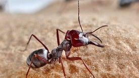 نملةٌ سريعة على رمالٍ ساخنة
