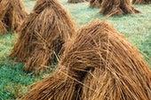 استخدام قش الأرز في تنقية مياه الصرف الصناعي