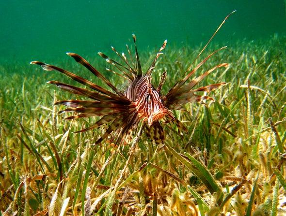 التهديدات المعقدة الناجمة عن الأنواع البحرية الدخيلة