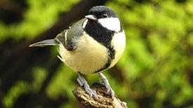 الطيور الأكثر جرأةً تختار شريكها بطريقة أسرع