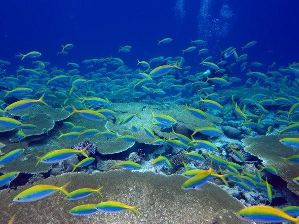 الفئران تهدد الشعاب المرجانية بالجزر الاستوائية في المحيط الهندي