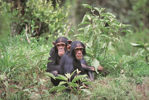التنوع البيولوجي في المناطق المدارية يواجه خطر الانهيار