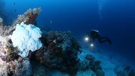 بسبب الاحترار: الشعاب المرجانية في المياه العميقة مُعرضة للموت