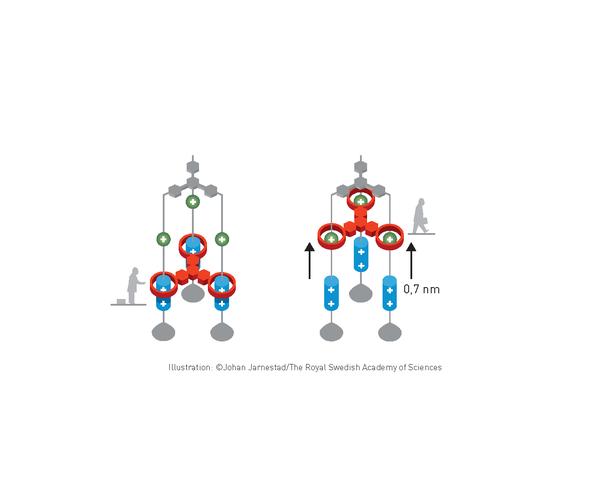 مطورو الآلات الجزيئية يحصدون جائزة نوبل في الكيمياء لعام 2016
