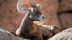 هل يتعين على علماء البيئة التعامل مع إناث الحيوانات وذكورها باعتبارها أنواعًا مختلفة؟
