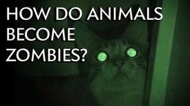 كيف تتحول الحيوانات إلى زومبي؟