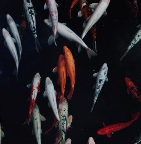 """تحذيرات من تزايد تركيز """"ميثيل الزئبق"""" السام في الأسماك"""