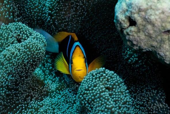 زيادة موجات الحر البحرية تهدد النظام البيئي