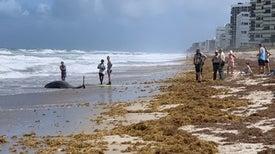 ملوِّثات بشرية تهدد الحياة البحرية غرب الأطلسي