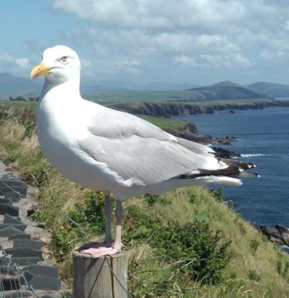 عوائد مخلفات الطيور البحرية تتجاوز 470 مليون دولار سنويًّا