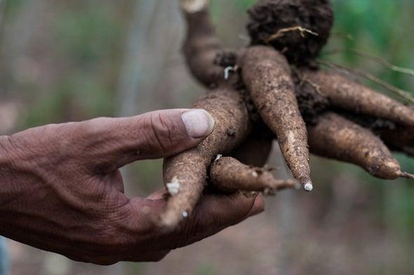 نظام لتحسين جودة المحاصيل الرئيسية وحمايتها من الآفات