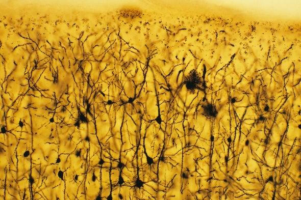 فك شفرة لغة الخلايا العصبية