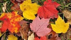 لماذا تُغير أوراق الأشجار ألوانها في فصل الخريف؟